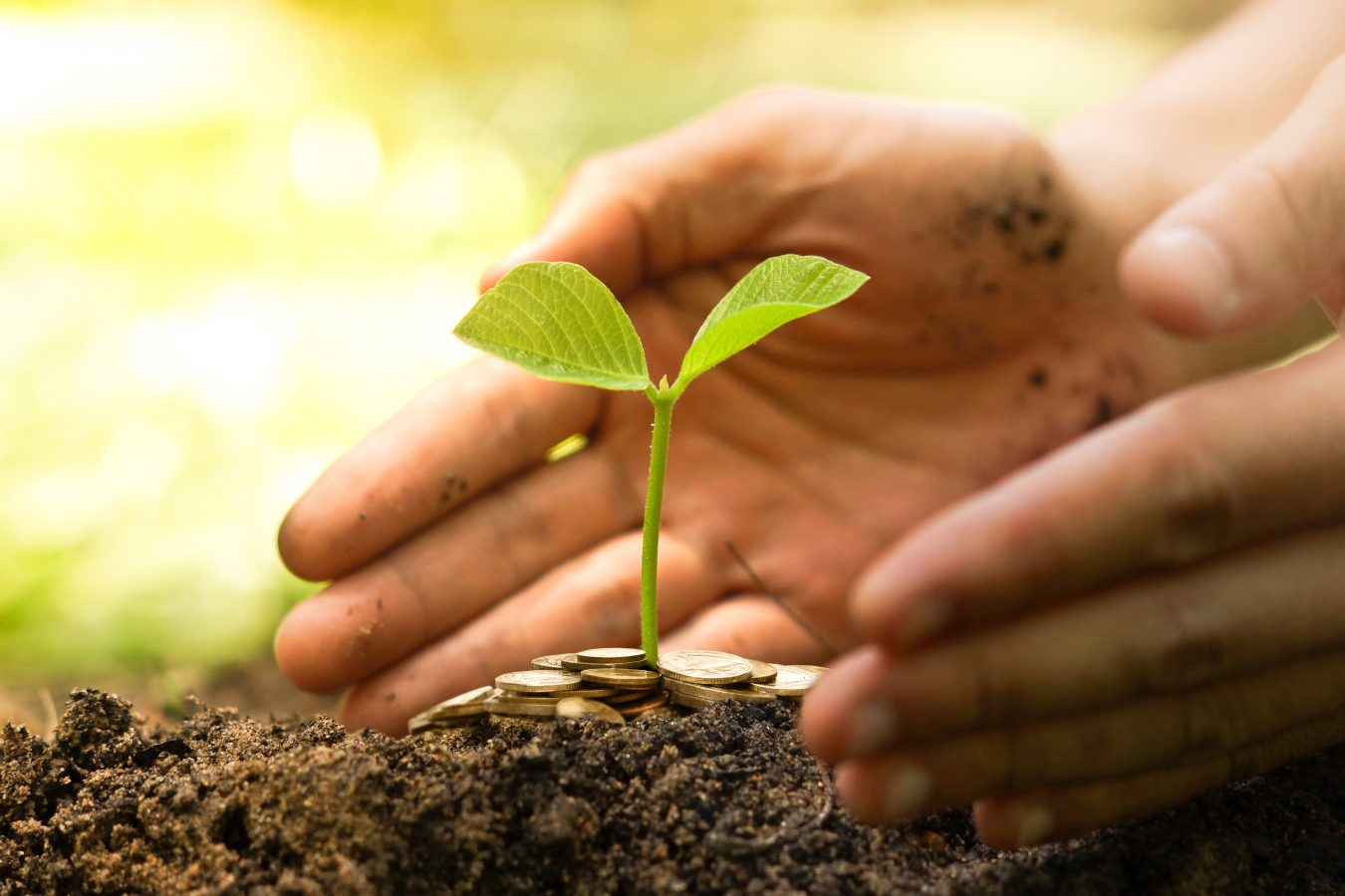 Hånd gir en gullmynt til en ung grønn plante som vokser på en haug. Foto: Istock